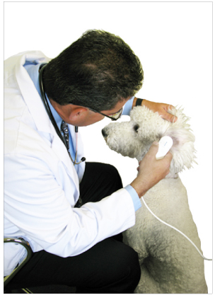 A vet inspecting a canine's ear with the BioCam2.0  video otoscope for the veterinary industry.